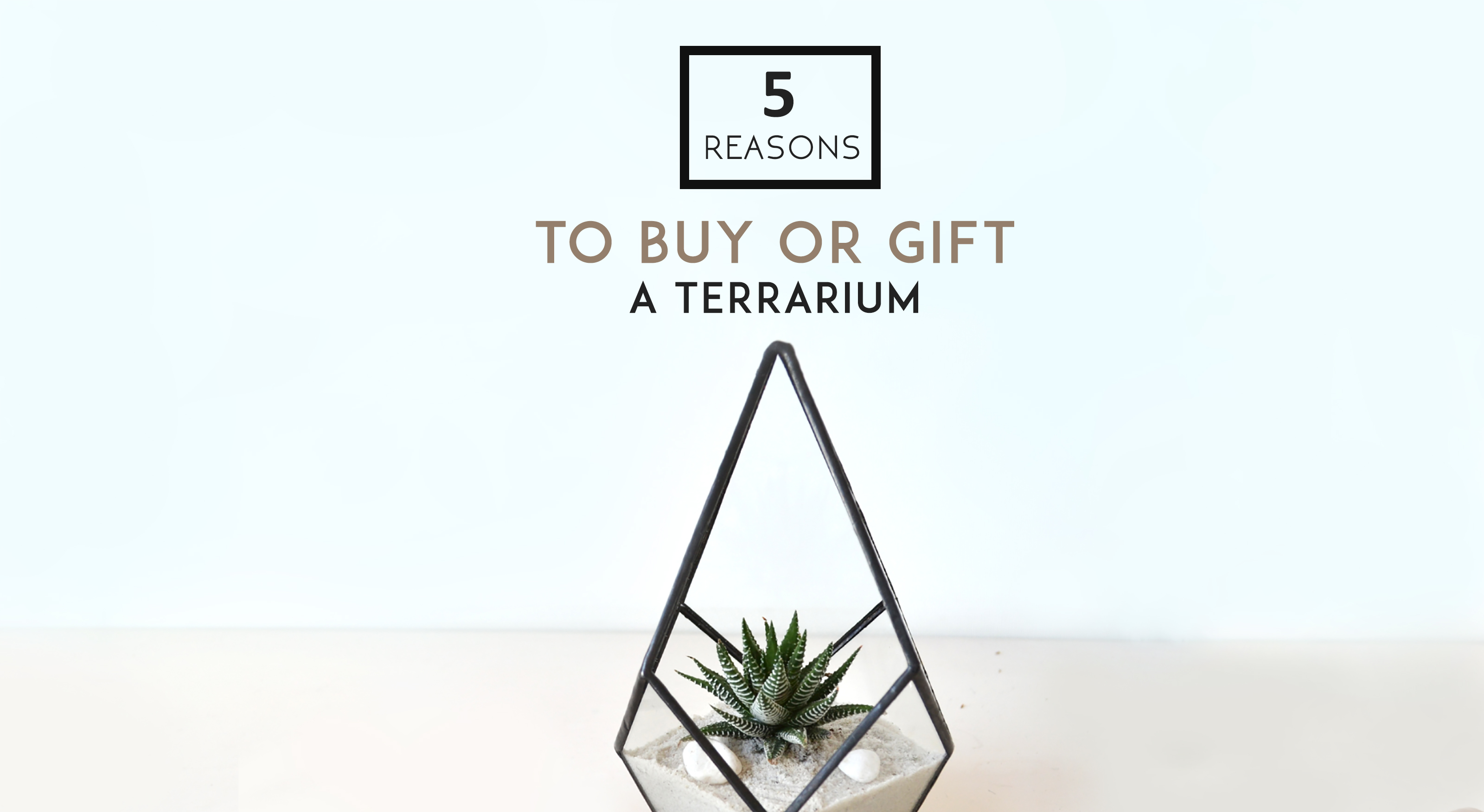 5 Reasons To Buy Or Gift A Plant Terrarium The Orijean