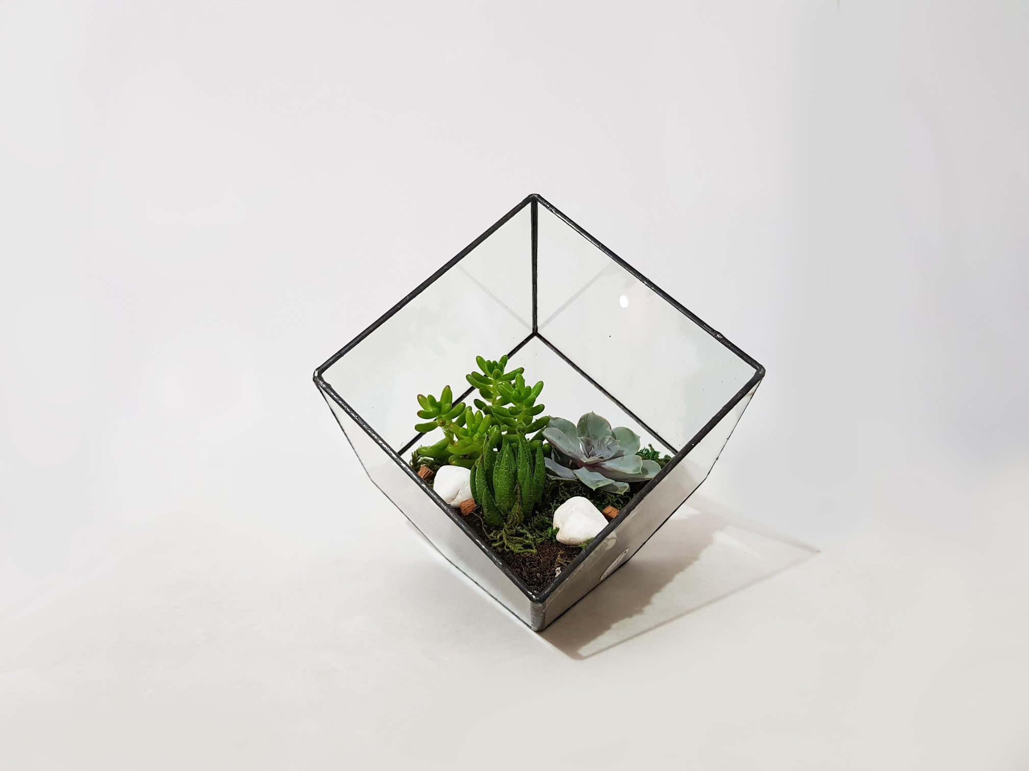 Cube (Small) - Tropical Style