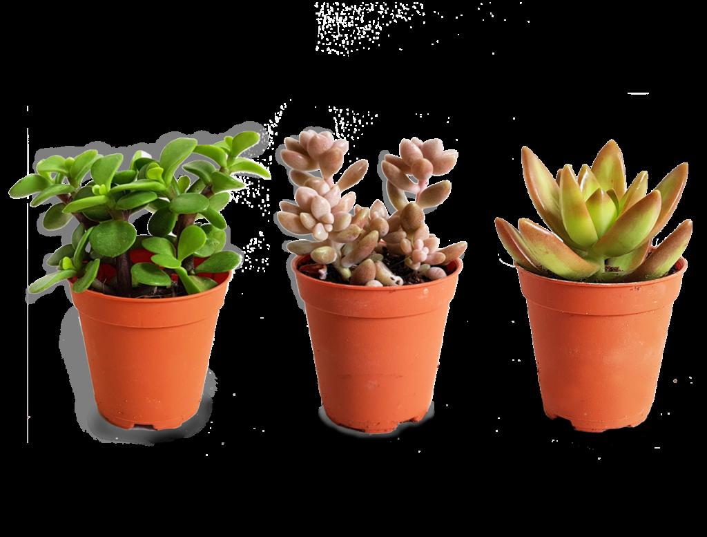 Plant Care Guide | The Orijean