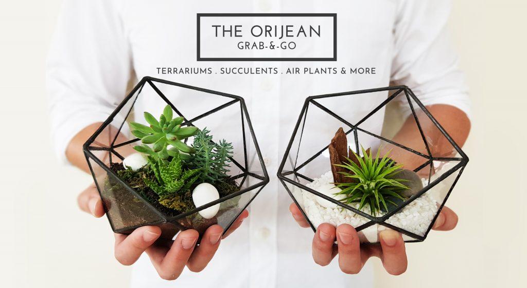 The Orijean Leading Minimalistic Terrarium Experts In Singapore