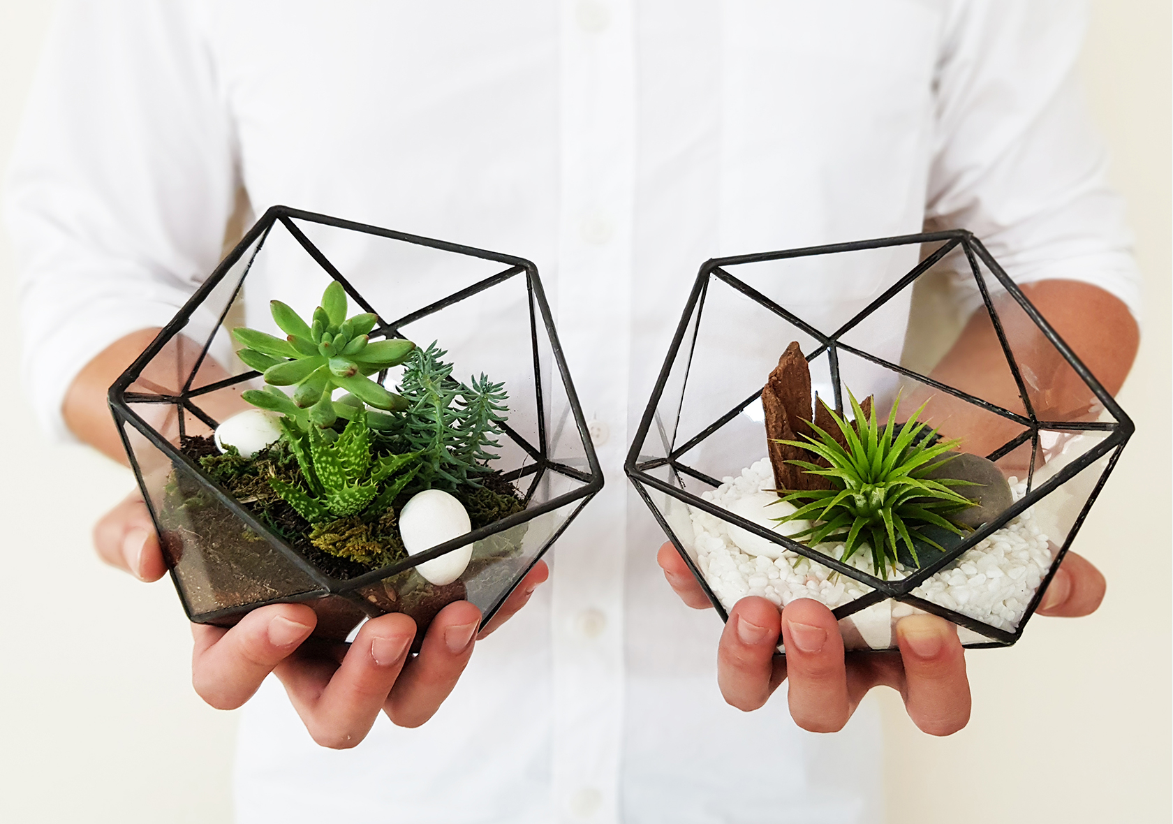 The Orijean Leading Minimalistic Terrarium Experts In Singapore